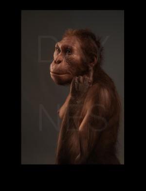 Реконструкция Australopithecus sediba  Credit  © Sculpture Elisabeth Daynes (http://www.daynes.com/) / Photo S. Entressangle.