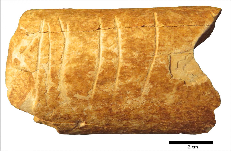 Фото фрагмента кости с гравировкой. Credit: Marion Prévost