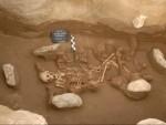 Скелет одного из индивидов средней бронзы, геном которого изучен в работе.  Credit  Ephorate of Antiquities of Kozani, Hellenic Ministry of Culture, Greece. Courtesy of Dr Georgia Karamitrou-Mentessidi.