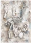 Скелет эпиорниса  Alain Rasolo, Wildlife Artist, Madagascar