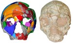 Череп Apidima 2 (справа) и его реконструкция (слева), принадлежащий неандертальцу. Credit: Copyright Katerina Harvati, Eberhard Karls University of Tübingen.