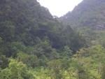 Дождевые леса на Суматре