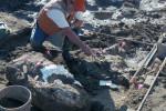 Палеонтолог Дон Свансон из Музея естественной истории Сан-Диего работает на раскопе в Cerutti Mastodon. Источник: San Diego Natural History Museum