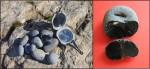 """Обсидиановые гальки (источник """"озеро Красное"""", Чукотка), фото Я.В.Кузьмина."""