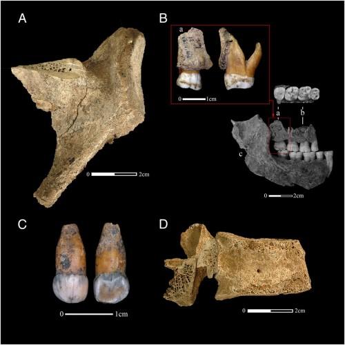 Genofond_2021_Neanderthals_Belgium_Kuzmin_Figure_1