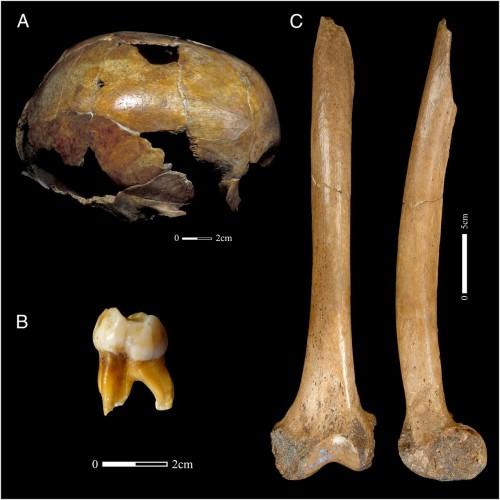 Genofond_2021_Neanderthals_Belgium_Kuzmin_Figure_3