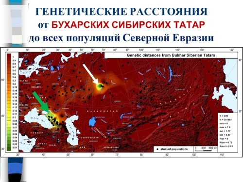 Геногеография_Серебровский7