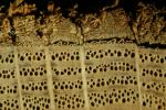 Годичные кольца древней дубовой балки под микроскопом. Credit: Willy Tegel