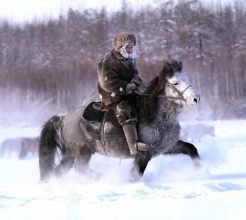 Лошадка якутская-1