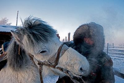 Лошадка якутская-2