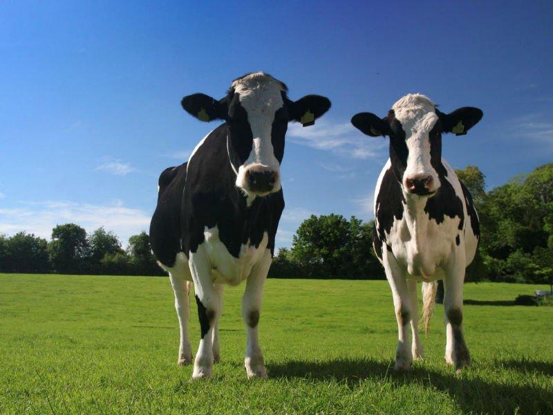 Породы-коров