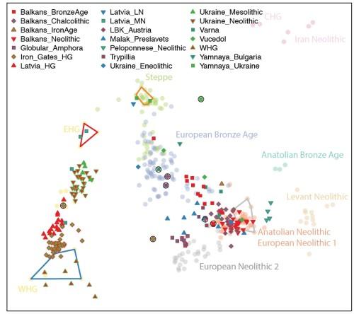 Анализ главных компонент древних геномов, изученных в данной работе (яркие цветные значки), и 265 ранее опубликованных древних геномов (бледные цветные значки). Многоугольники очерчивают образцы, которые составили кластеры на графике ADMIXTURE.