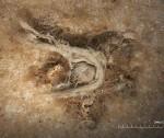 Фрагмент неандертальского шнура под микроскопом.  Credit  © C2RMF