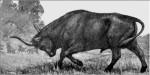 Тур, дикий предок домашнего скота.
