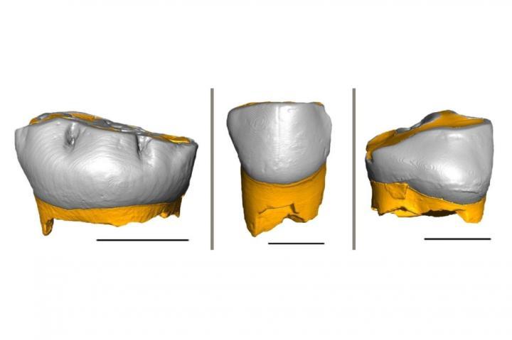 Компьютерная реконструкция молочных зубов неандертальцев. Credit: Federico Lugli