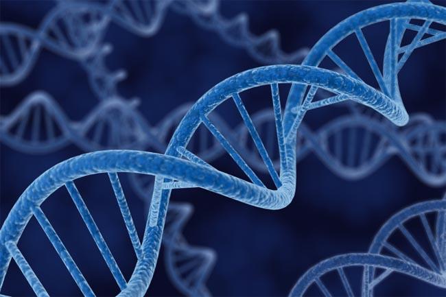 genom-human1