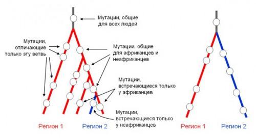 к Боринской-3