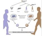 Схема эксперимента (Cleber A. Trujillo et al. 2021)