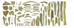 Кости неандертальцев из пещеры Гойе.