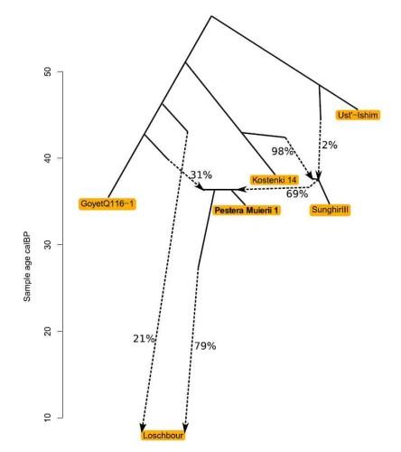 Моделирование методом Admixture graph  генетической истории европейцев верхнего палеолита. Стрелками показаны предполагаемые потоки генов. Слева – хронологическая шкала.