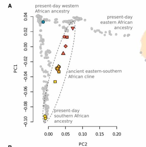 График анализа главных компонент древних геномов (цветные символы) и современных африканских геномов (серые точки). Условные обозначения см. на предыдущем рисунке.
