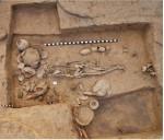 Фото скелета I6113 (Vasant Shinde et al., 2019)