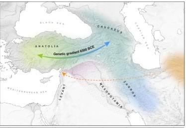 Рисунок из статьи Skourtanioti et al. , 2020