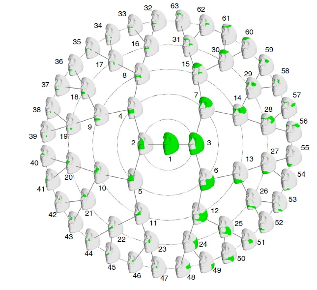 Рисунок из статьи Claes et al.