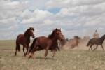 Лошади в степях Внутренней Монголии, Китай. Credit: Ludovic Orlando.